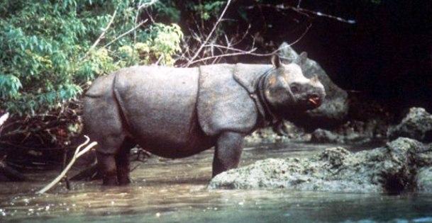 animales raros que pueden desaparecer 16