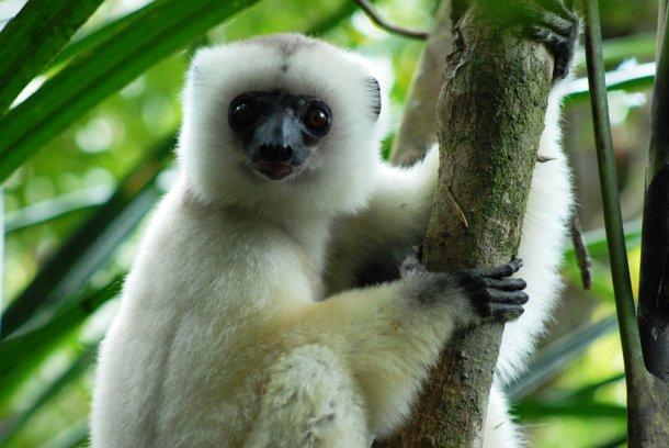 animales raros que pueden desaparecer 20