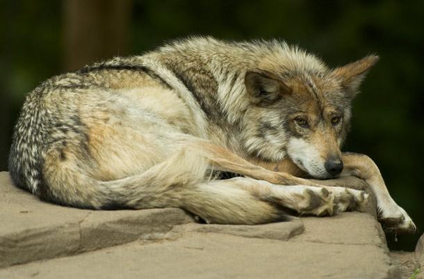animales raros que pueden desaparecer 23