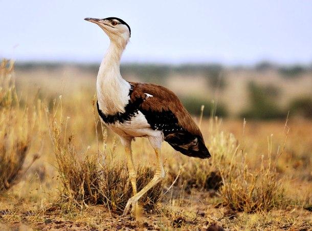 animales raros que pueden desaparecer 24