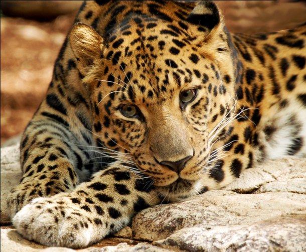 animales raros que pueden desaparecer 8