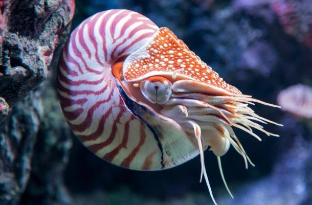 animales raros que pueden desaparecer 9