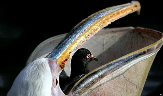 animales_comen_un_bocado_3