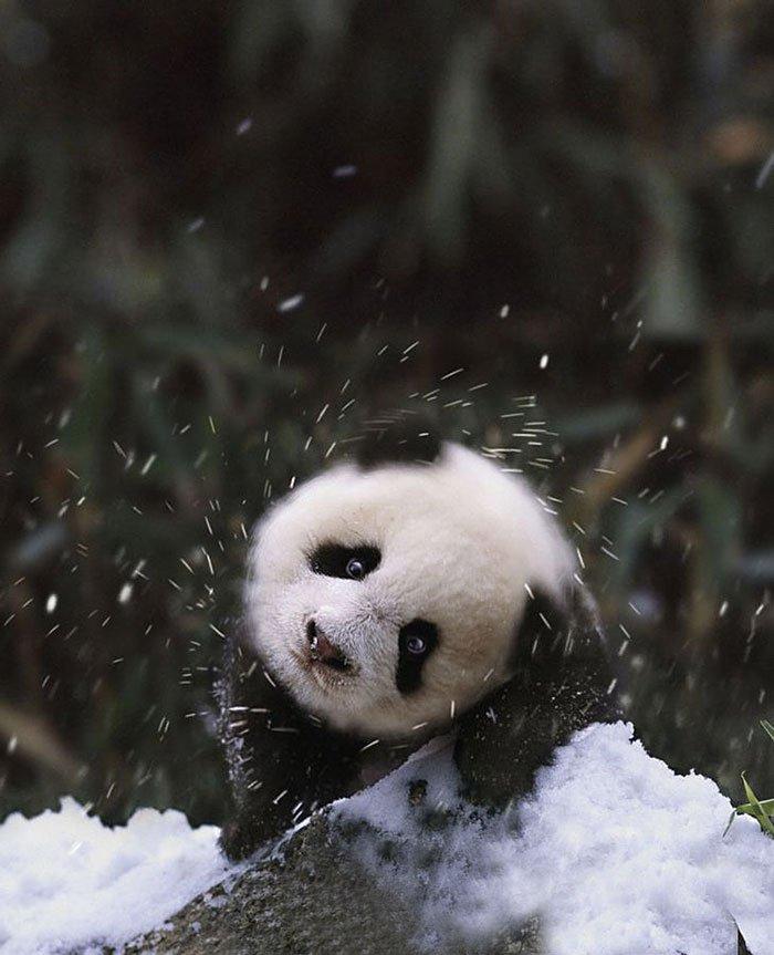 animales_en_la_nieve_10