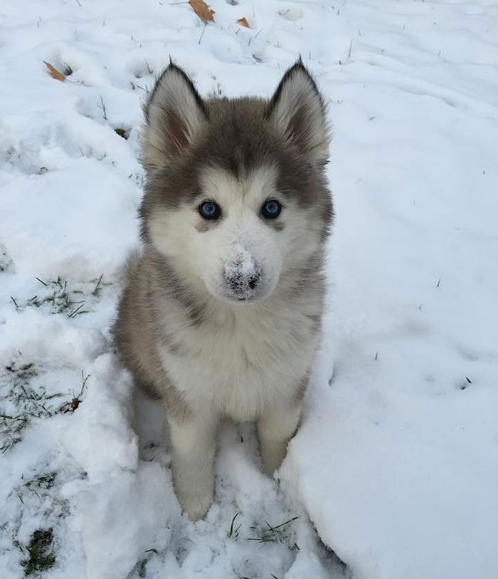 animales_en_la_nieve_13
