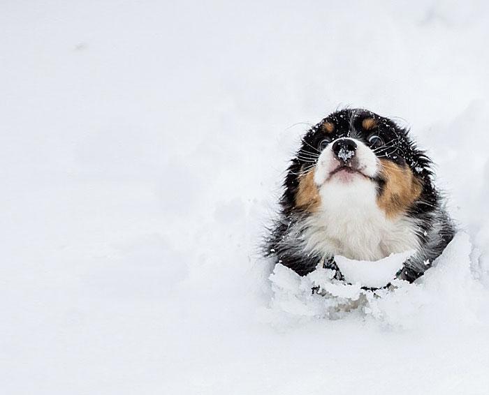 animales_en_la_nieve_16