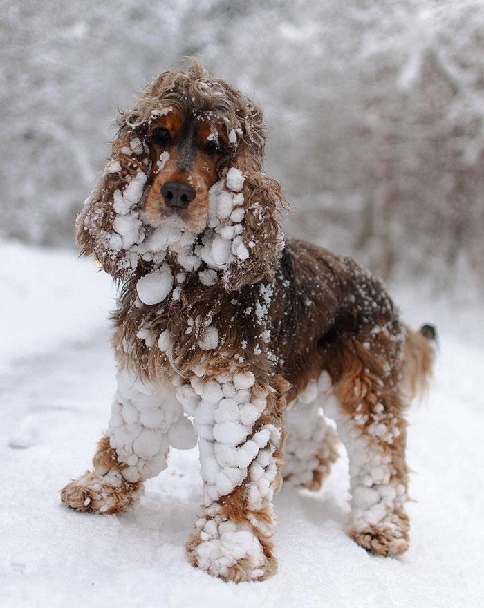 animales_en_la_nieve_17