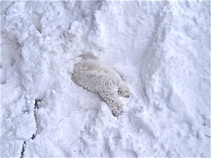 animales_en_la_nieve_18