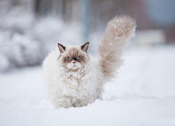animales_en_la_nieve_2
