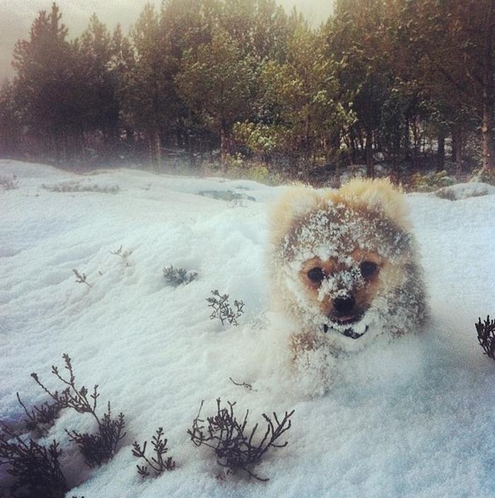 animales_en_la_nieve_20
