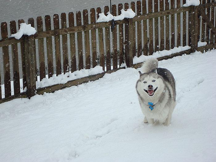 animales_en_la_nieve_21