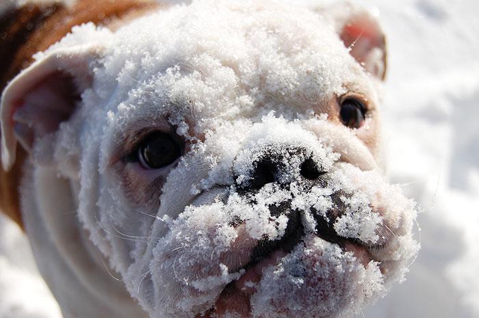 animales_en_la_nieve_22