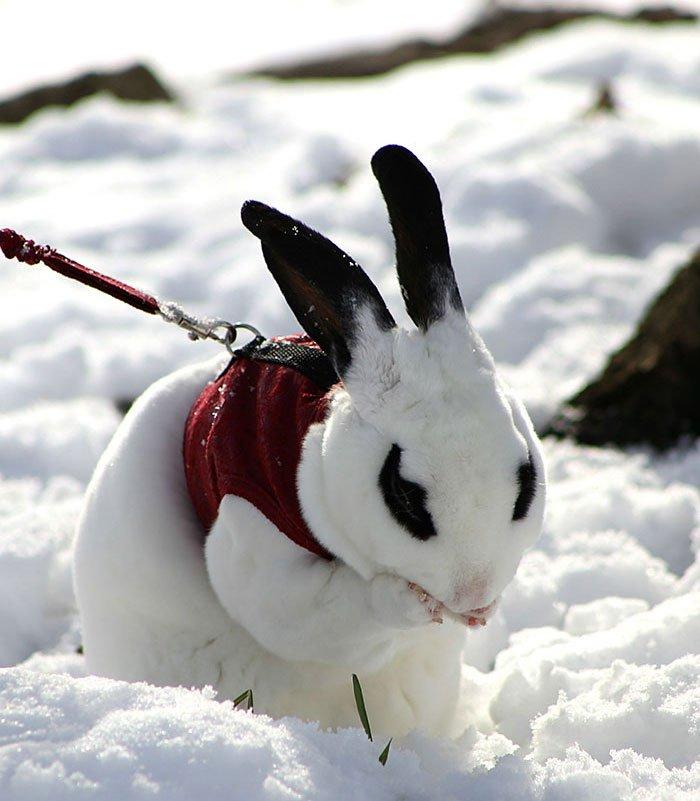animales_en_la_nieve_27