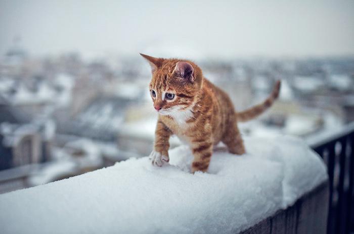 animales_en_la_nieve_28