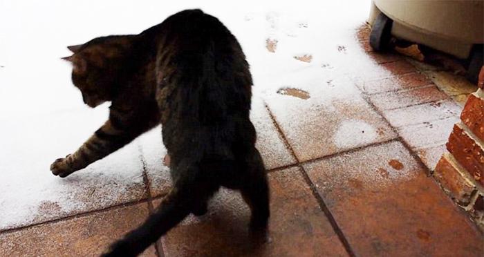 animales_en_la_nieve_29