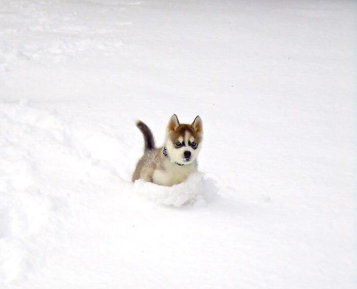 animales_en_la_nieve_30