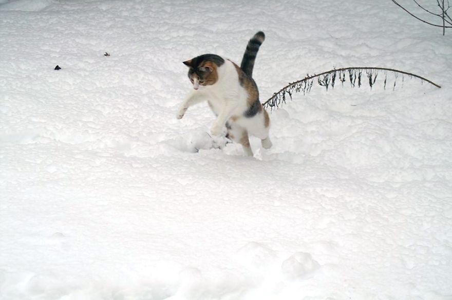 animales_en_la_nieve_34