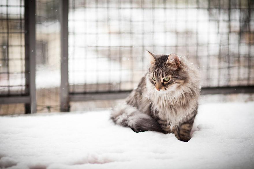 animales_en_la_nieve_35