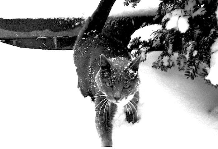 animales_en_la_nieve_37