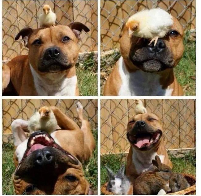 animales_molando_7