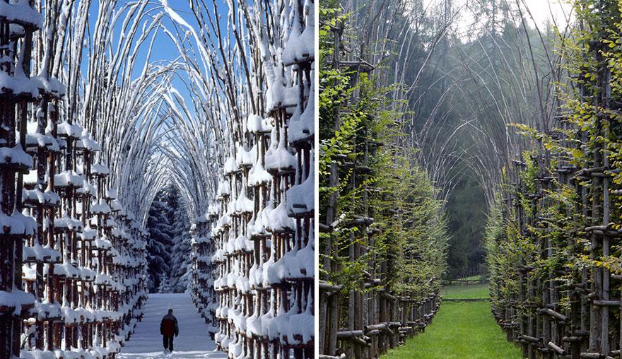 ¿Una catedral hecha de árboles? conoce esta majestuosa combinación de arquitectura y naturaleza