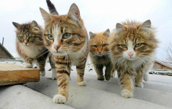 criados por animales 4
