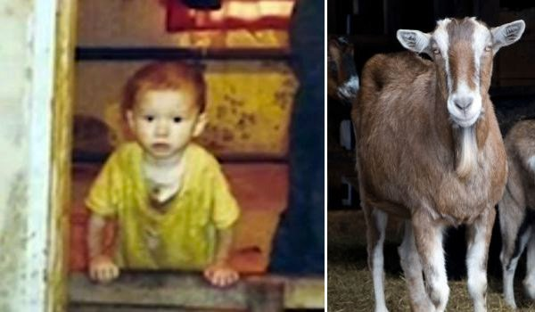 criados por animales 6