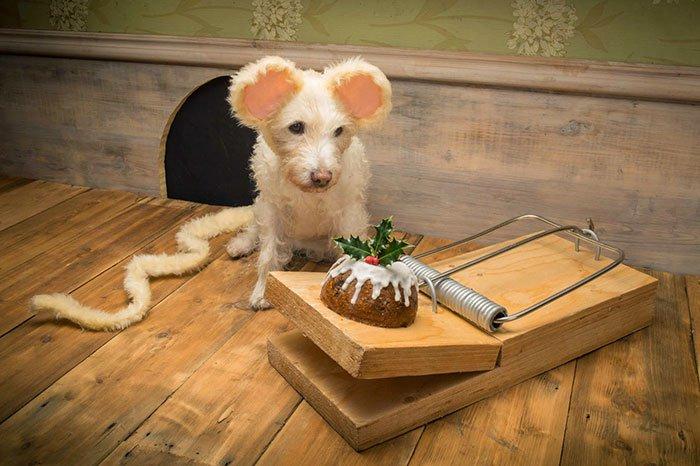 disfraz perro navidad 1