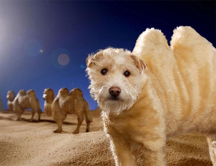 disfraz perro navidad 4