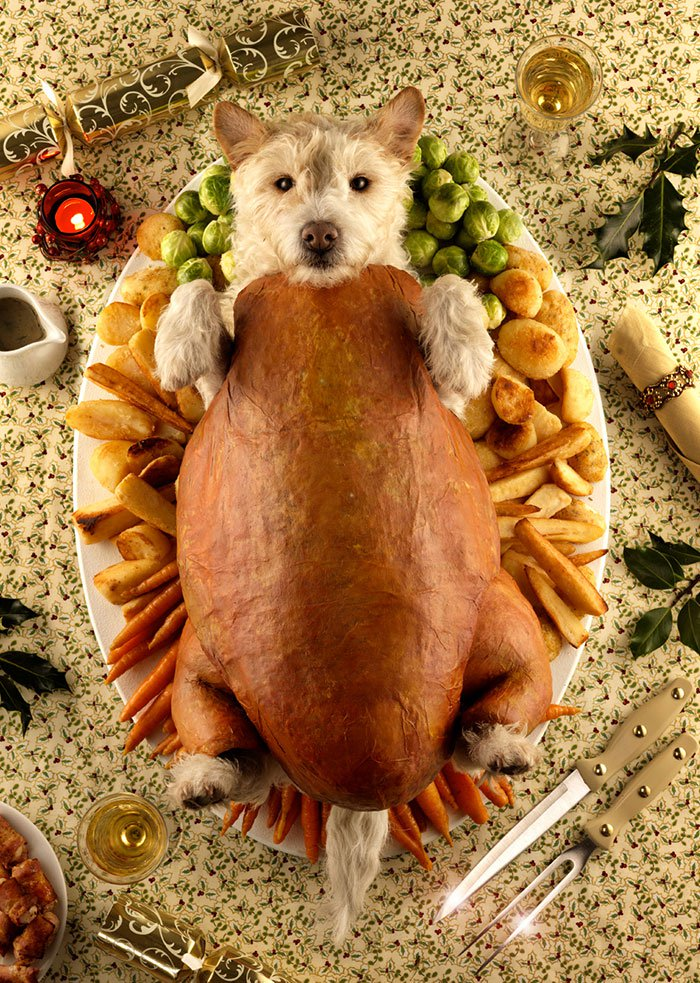 disfraz perro navidad 5