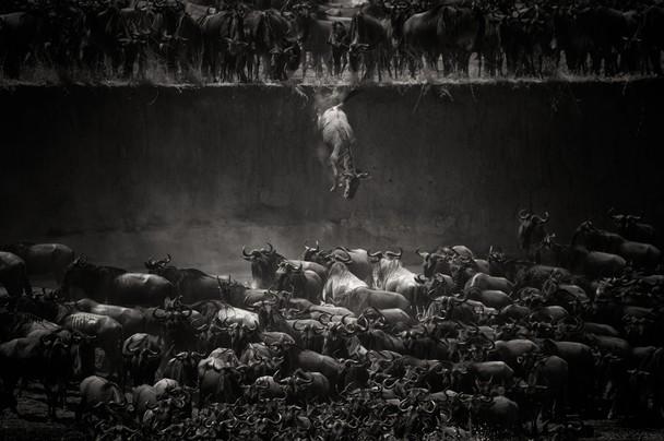 ganadoras National Geographic 2014 13