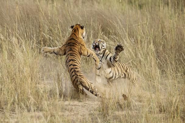 ganadoras National Geographic 2014 19