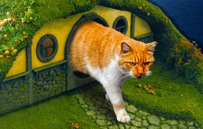 gato señor de  los anillos 1