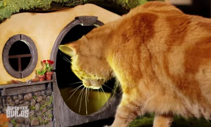 gato señor de  los anillos 6