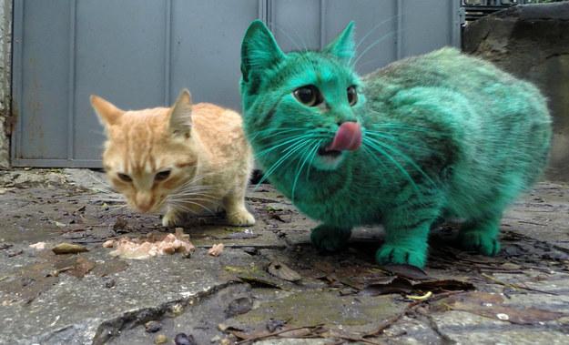 gato-verde1