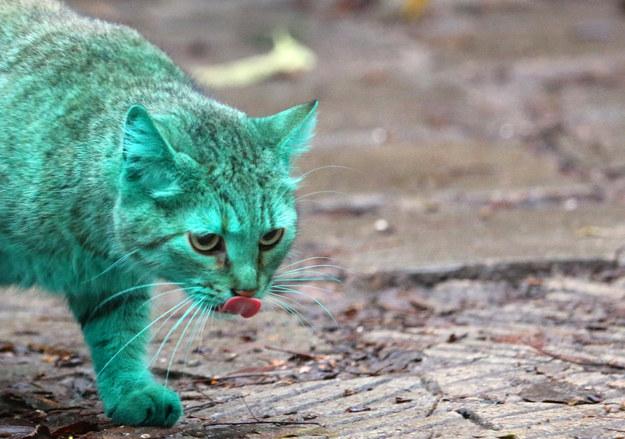 gato-verde3