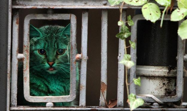 gato-verde4