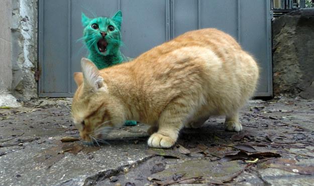 gato-verde5