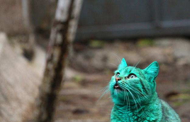 gato-verde7