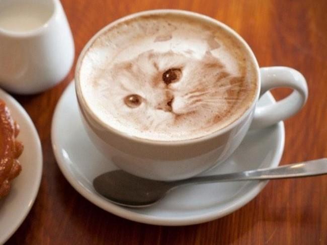 gato_latte_2