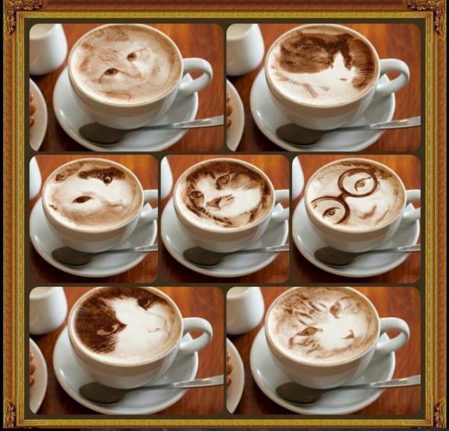 gato_latte_4