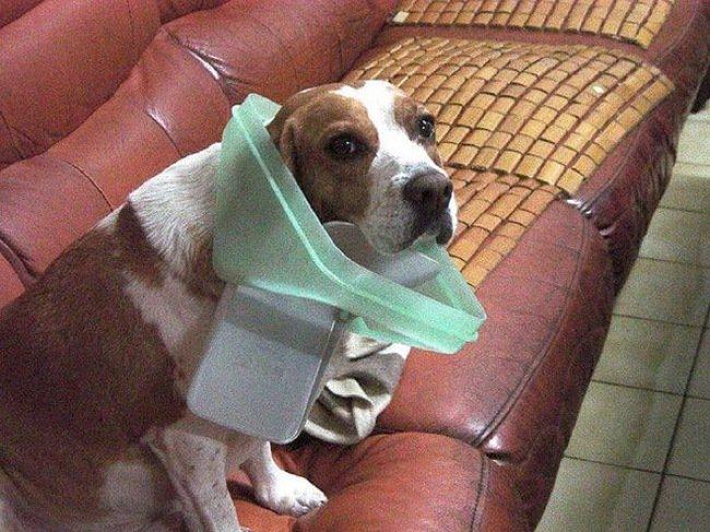 mascotas_pilladas_2