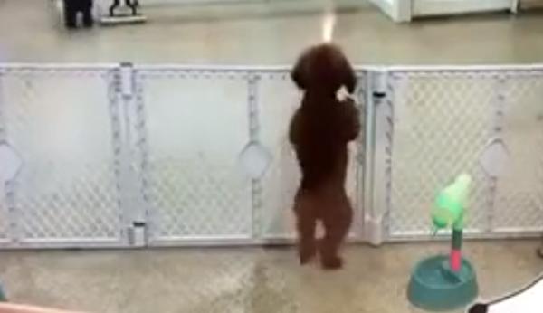 perro-impaciente