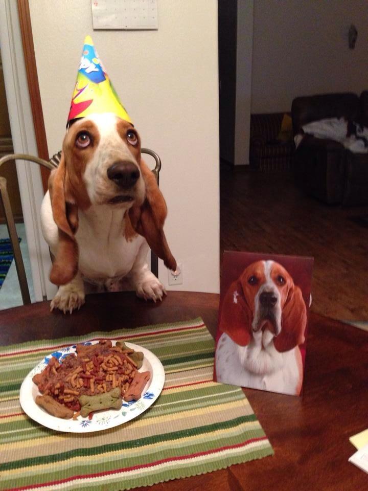 perros agradecidos 15