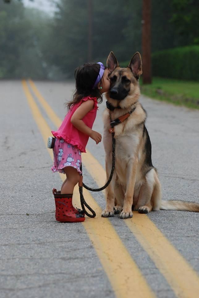 perros agradecidos 19