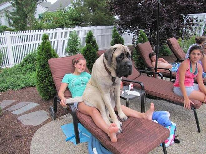 perros grandes 10