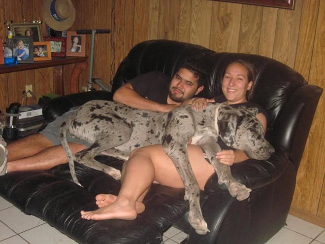 perros grandes 13