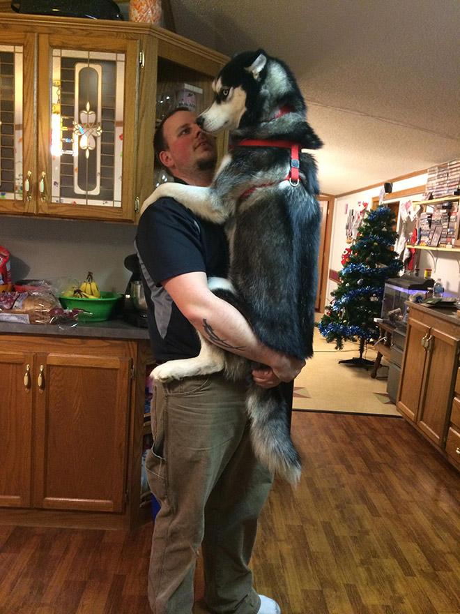 perros grandes 15