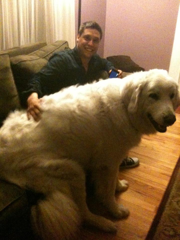 perros grandes 18