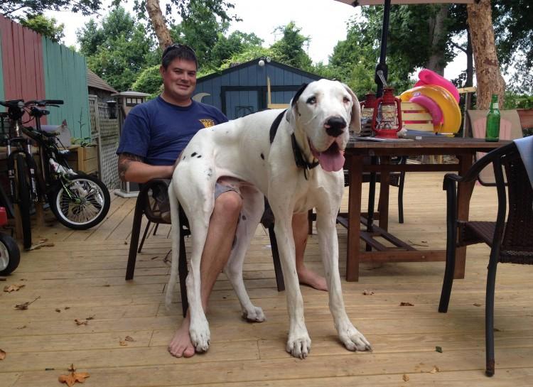 perros grandes 19